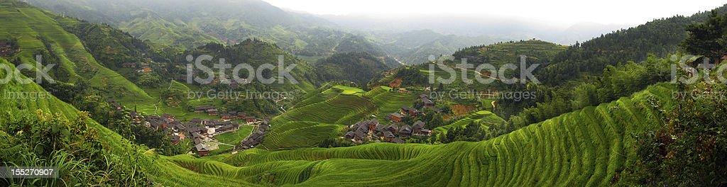 Rice Field Panorama royalty-free stock photo