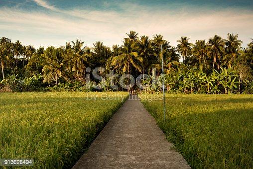 607590542istockphoto Rice field 913626494