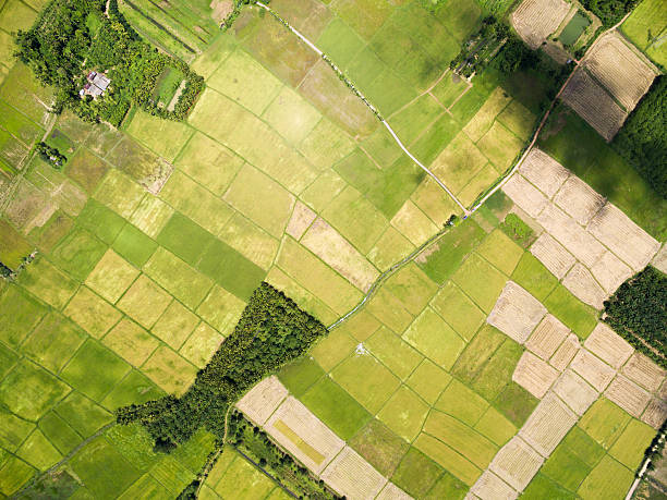 rice field plantation pattern rice field plantation pattern aerial view cultivated land stock pictures, royalty-free photos & images