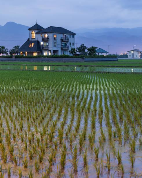 Rice Field Taiwan – zdjęcie