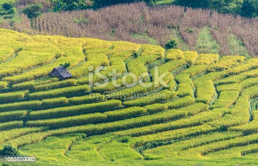 607590542istockphoto Rice field terrace, agriculture terrace on  hills. 1053920062