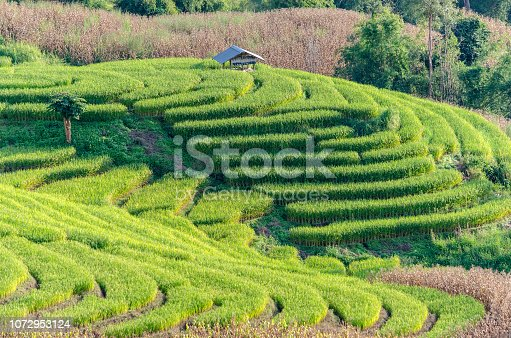 istock Rice field terrace, agriculture terrace on  hills. 1072953124