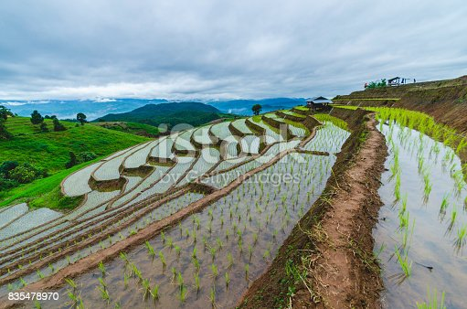 istock rice field terraces on mountain. rice paddies on hillside. freshness nature landscape background. 835478970