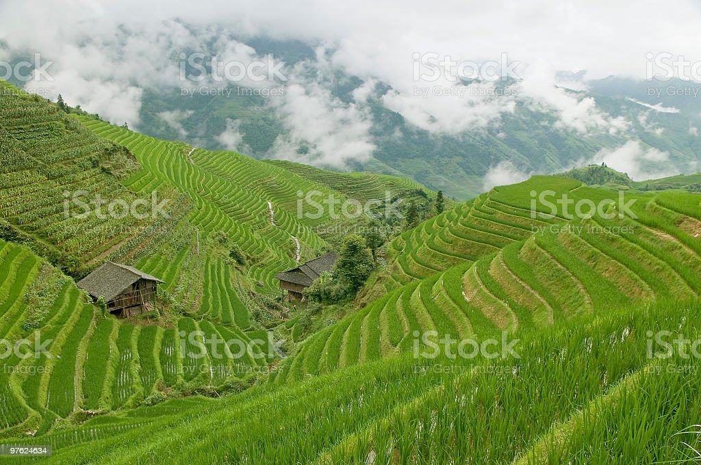 Rice Field Terraces With Cottages royalty-free stock photo