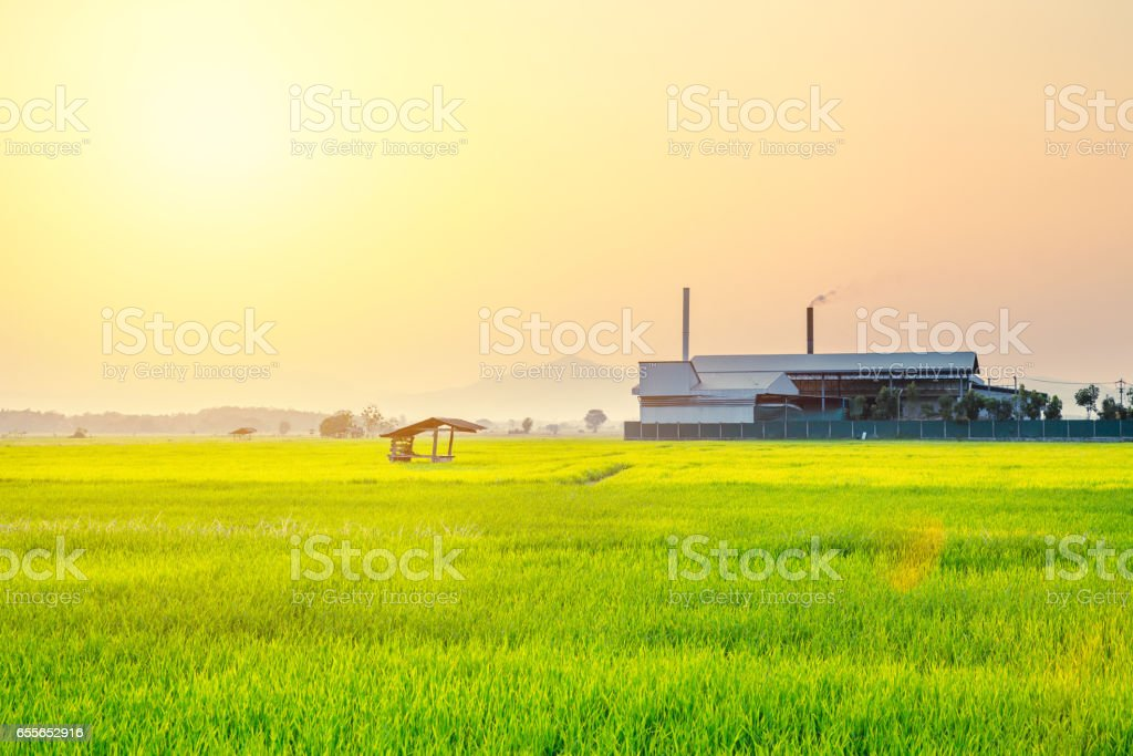 Rice field with industry factory nature background. stock photo