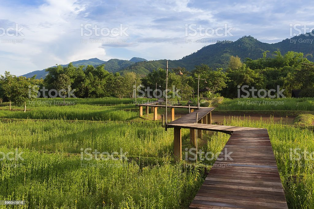 Rice field with mountain background and wooden path royalty-free stock photo