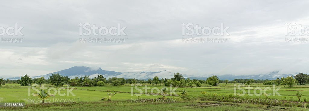 Rice field with scenic background. stock photo