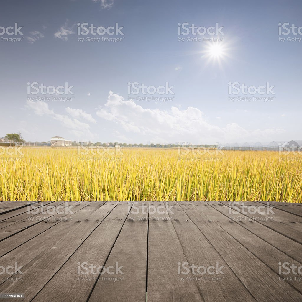 rice field  with wooden board royalty-free stock photo