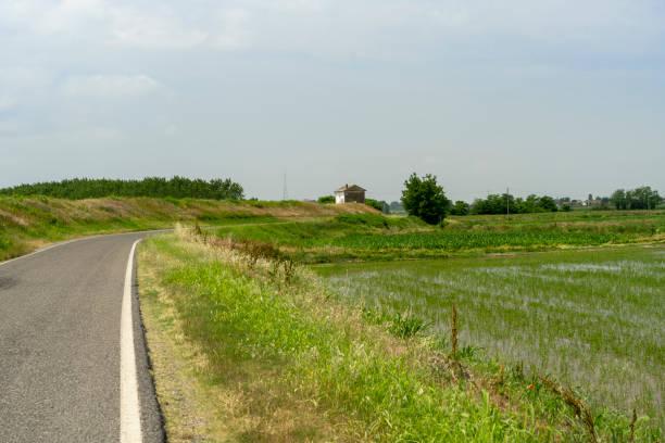 Campos do arroz ao longo do Rio do po - foto de acervo