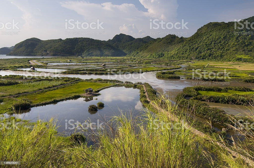Rice fields and mountains on Cat Ba Island,Vietnam stock photo