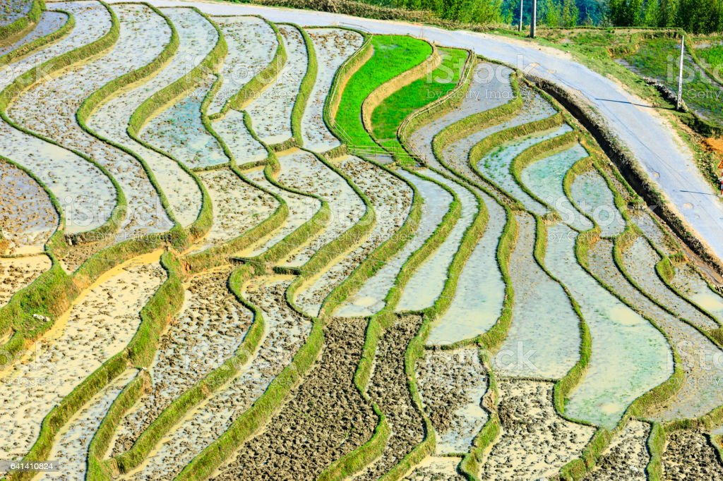 Rice fields at Lao Cai province stock photo