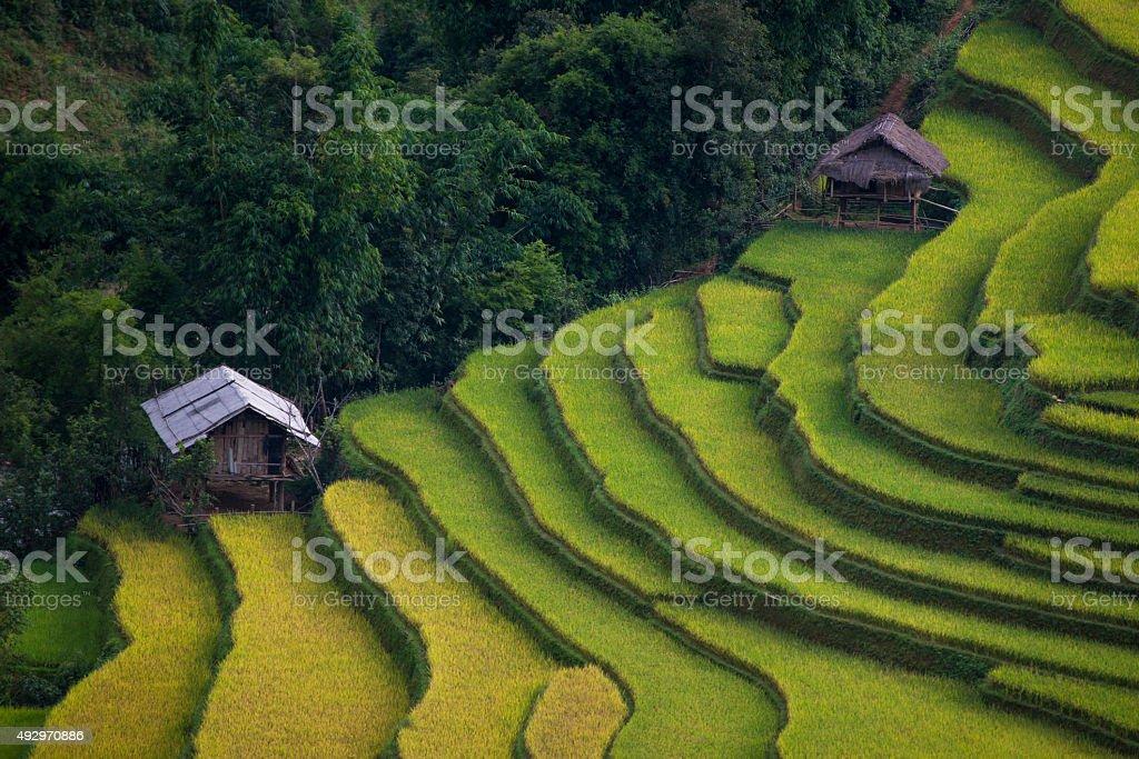 Rice fields at Mu Cang Chai, Vietnam. stock photo