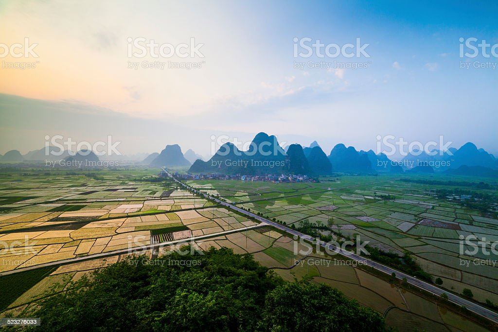Rice fields at sunset stock photo