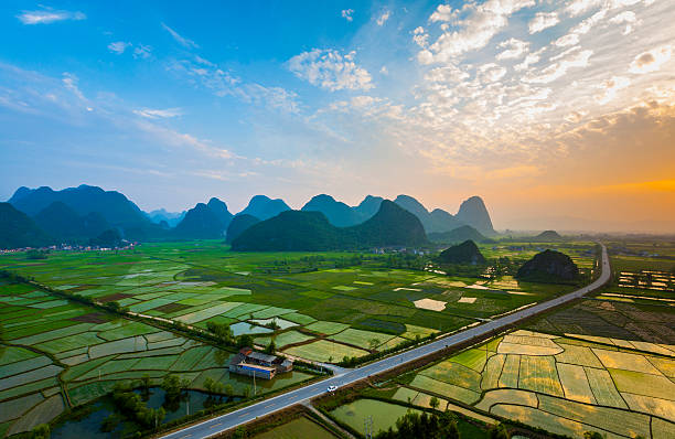 Rice fields at sunset,guilin,china'