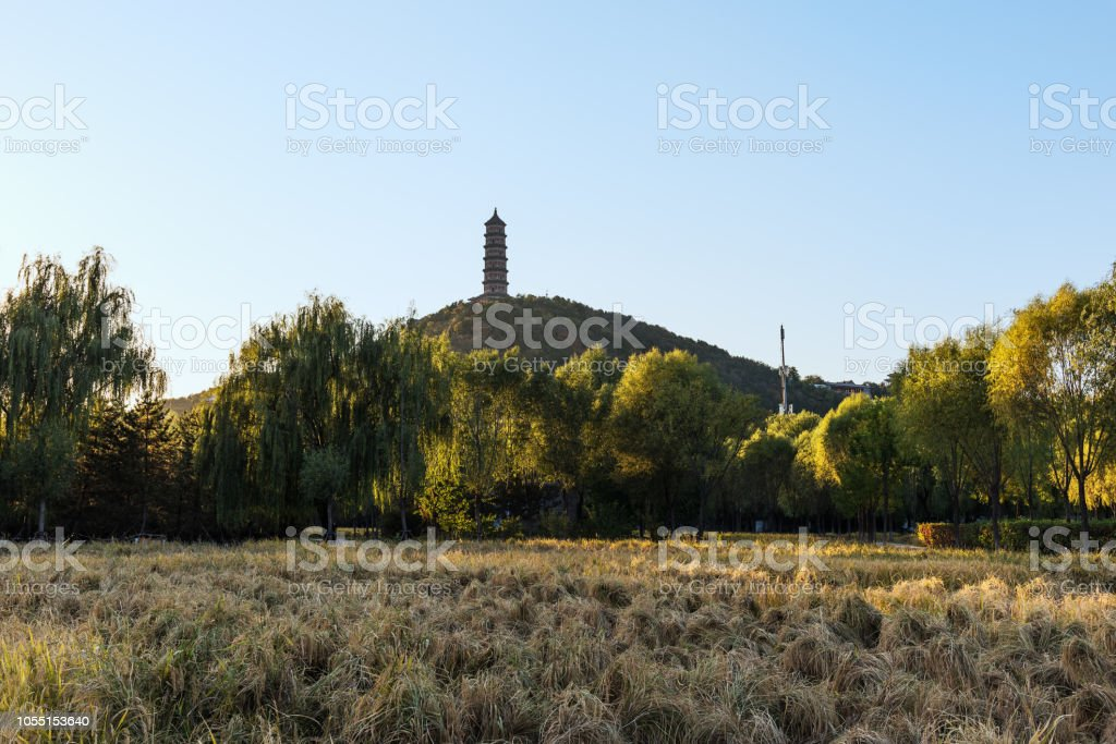 Rice fields at the foot of Yuquan Mountain in Beijing at sunset stock photo