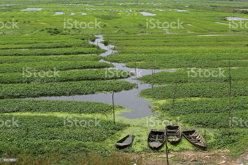 Reis Felder in Kambodscha Lizenzfreies stock-foto