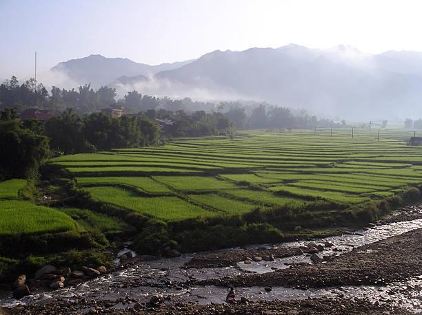 Reis Felder Morgen Nebel – Foto