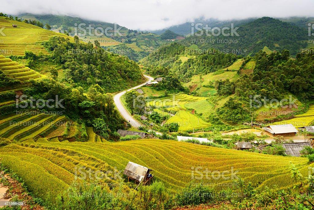 Rice Fields in Mu Cang Chai, near Sapa town, Vietnam royalty-free stock photo