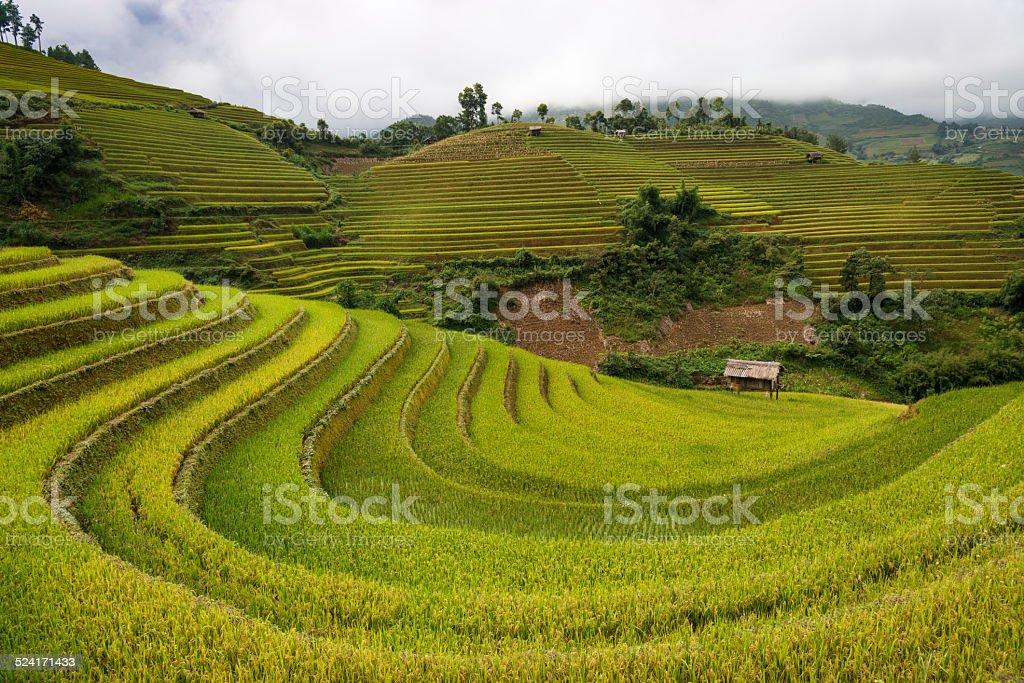 Rice Fields in Mu Cang Chai, near Sapa town, Vietnam stock photo
