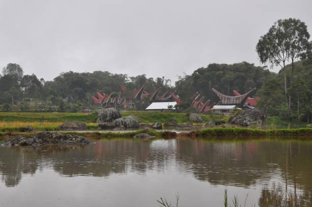 Reisfelder Landschaft in Sulawesi – Foto