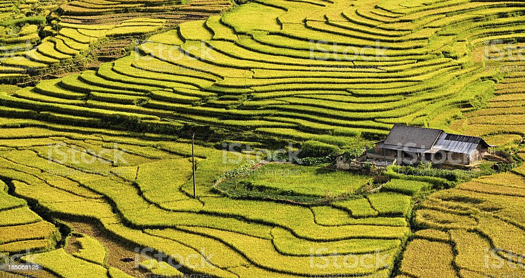 Rice fields near Sapa town in North Vietnam stock photo