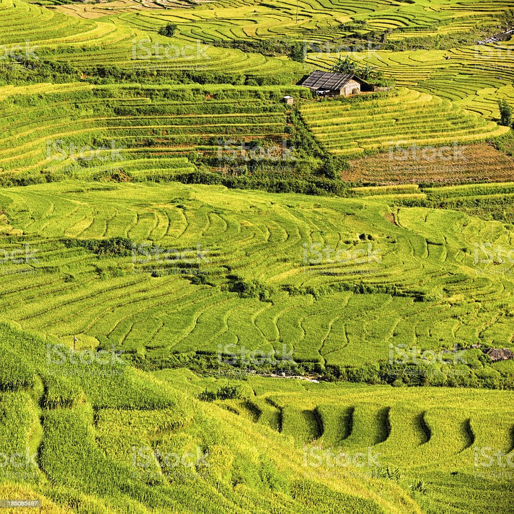 Rice fields near Sapa town in North Vietnam royalty-free stock photo