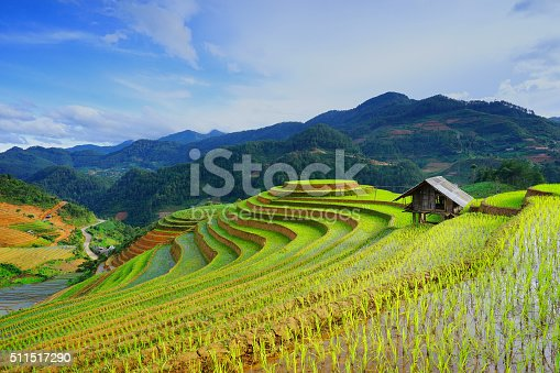 istock Rice fields on terrace in rainy season. Vietnam. 511517290