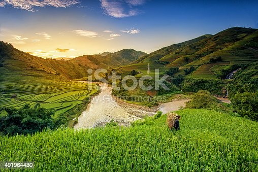 istock Rice fields on terrace 491964430