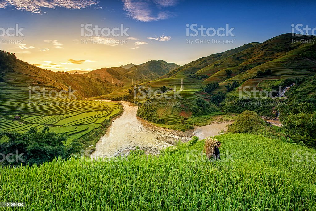 Rice fields on terrace stock photo