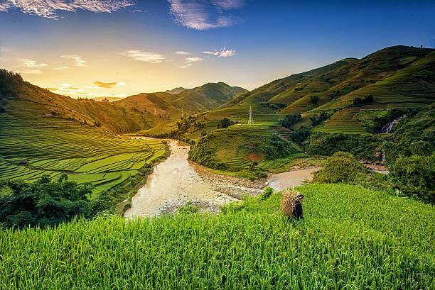 Rice fields on terrace Rice fields on terrace in rainy season at Mu Cang Chai, Yen Bai, Vietnam. Rice fields prepare for transplant at Northwest Vietnam rice paddy stock pictures, royalty-free photos & images