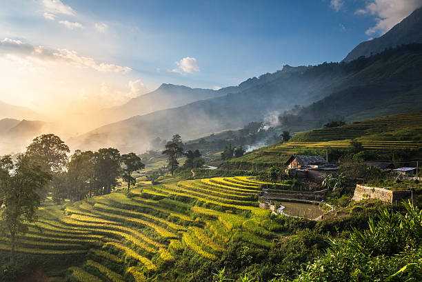 rice fields on terraced in sunset at sapa. - terras veld stockfoto's en -beelden