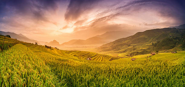 rice fields on terraced in sunset - laos lebensmittel stock-fotos und bilder