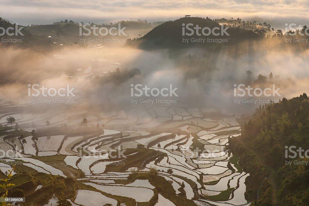 Rice fields on terraced in surice, stock photo