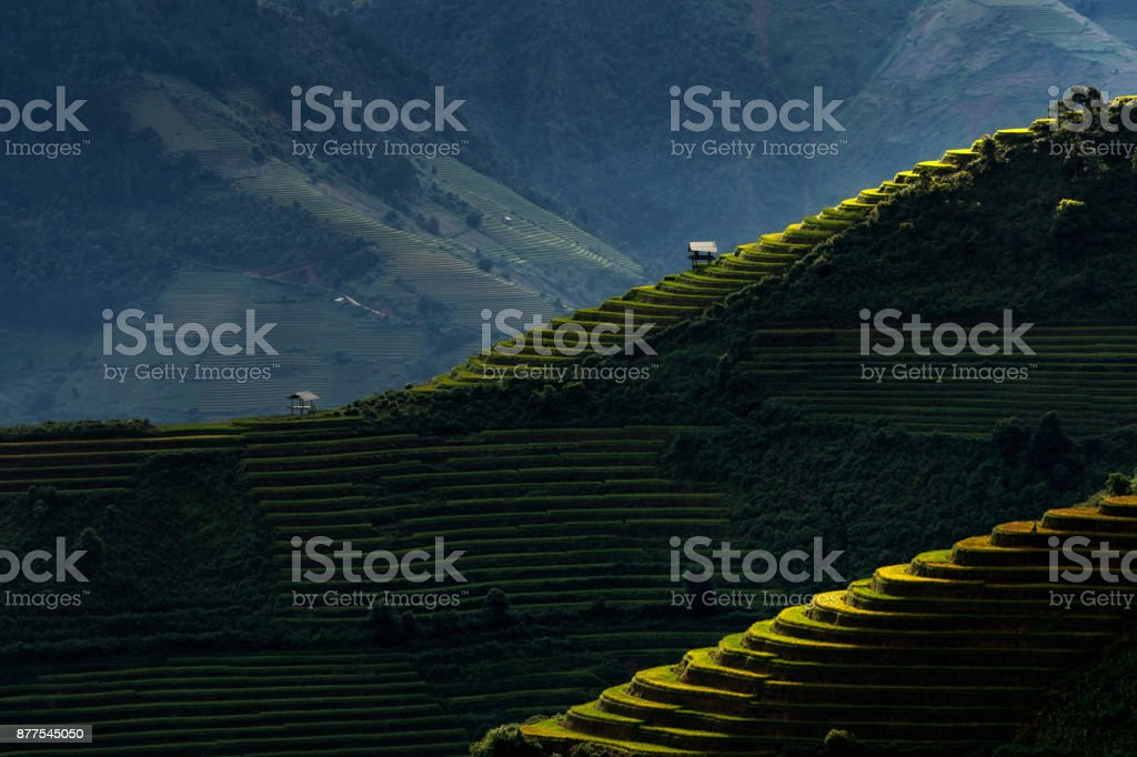 Rice fields on terraced of Mu Cang Chai District at sunrise time, YenBai province, Northwest Vietnam stock photo