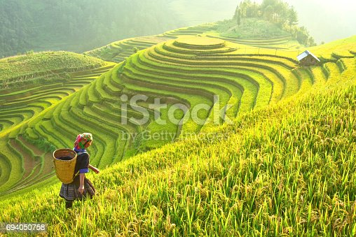 istock Rice fields on terraced of Mu Cang Chai, YenBai, Rice fields prepare the harvest at Northwest Vietnam.Vietnam landscapes. 694050758