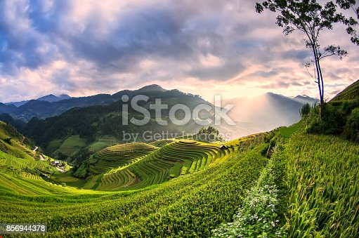 istock Rice fields on terraced of Mu Cang Chai, YenBai, Vietnam, soft focus 856944378