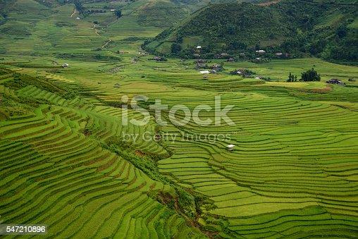 607590542istockphoto Rice fields on terraced 547210896