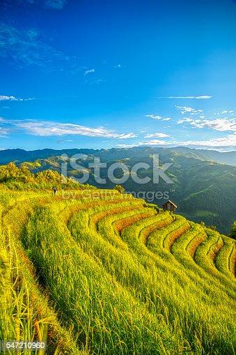 607590542istockphoto Rice fields on terraced 547210960