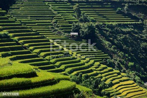 607590542istockphoto Rice fields on terraced 547211026