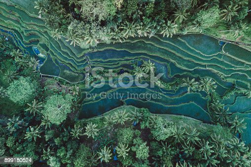 Drone view of rice terraces of Tegalalang, Ubud, Bali.