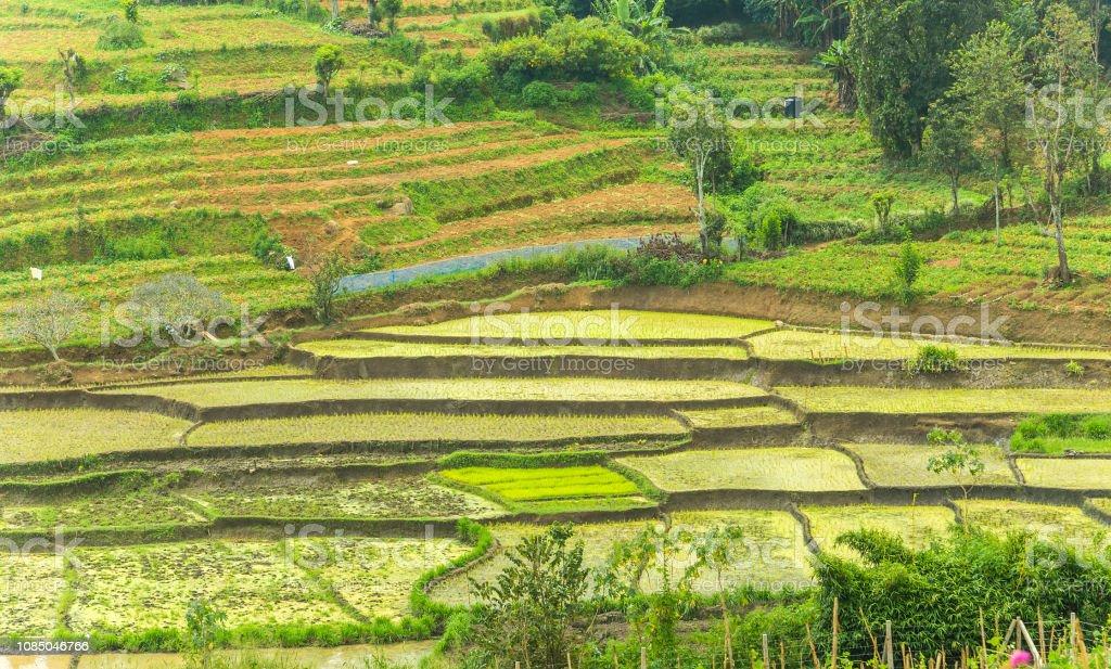 Campos Terrazas Complejo Arroz Sri Lanka Foto De Stock Y Más