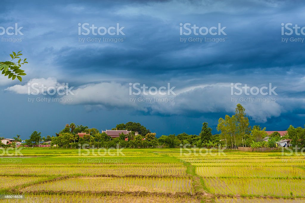 Rice fields with rain clouds at Chiangmai, Thailand. stock photo