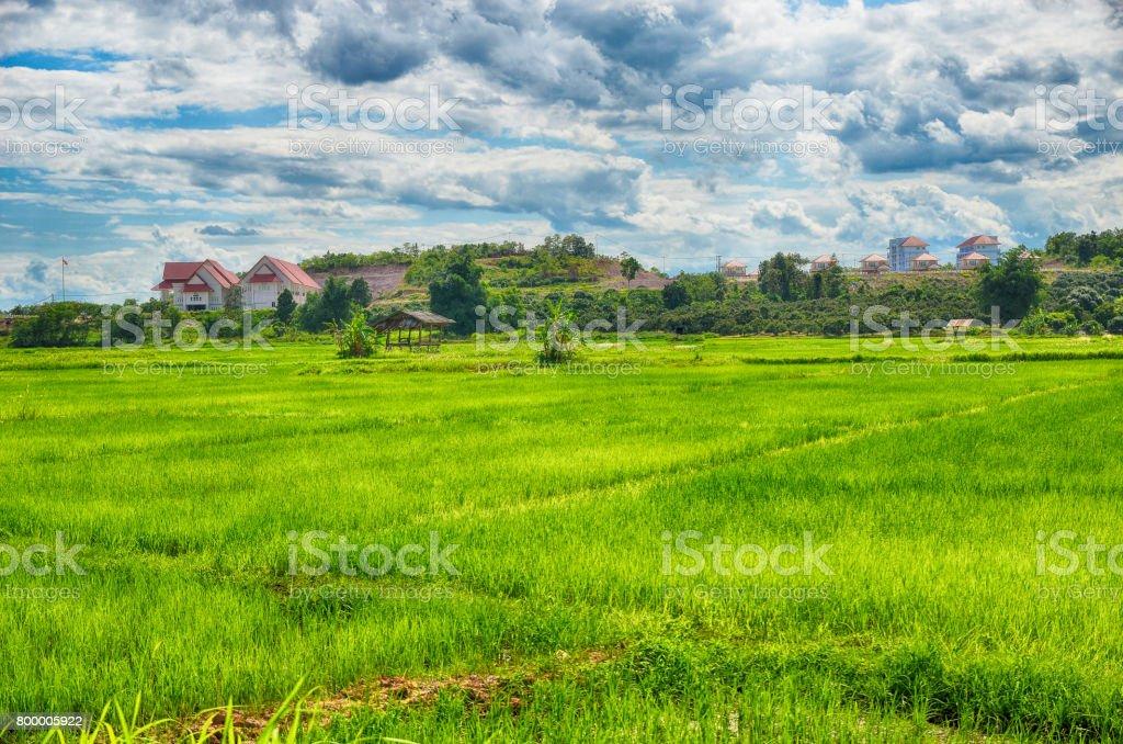Rice filed around home stock photo