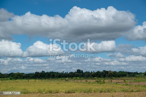 istock rice green field and blue sky 1000877036