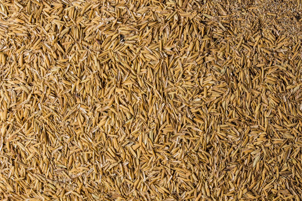 rice hulls - hull stock pictures, royalty-free photos & images