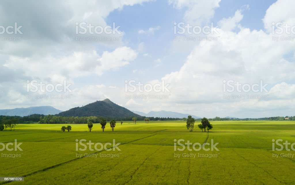 Rice is the main food for asian people stock photo