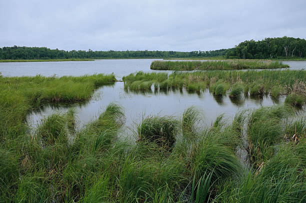 Rice Lake near Breezy Point stock photo