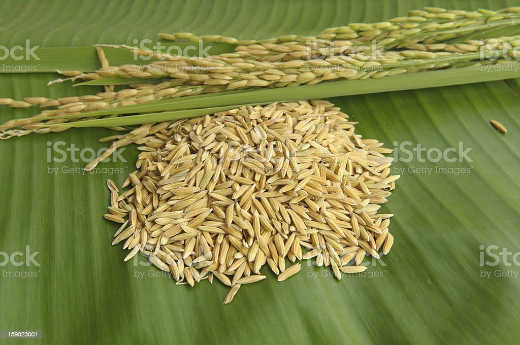 Rice on green leaf background royalty-free stock photo