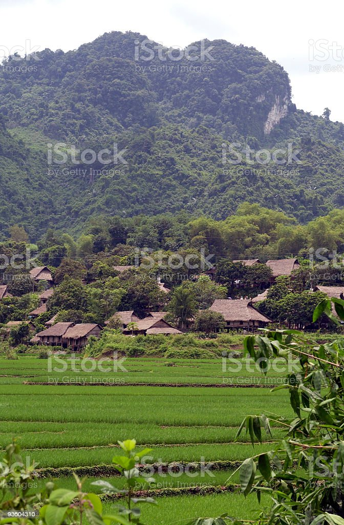 Rice paddies with village houses in the background. royalty-free stock photo