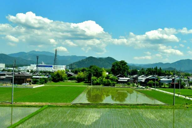 Rice Paddy and Rural Landscape of Japan Rural landscape of Japan after rice-planting, taken from Tokaido Shinkansen Super Express in Shiga Prefecture before reaching Kyoto from Nagoya. satoyama scenery stock pictures, royalty-free photos & images